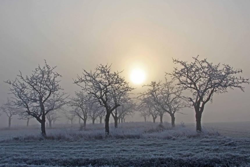 Challenge EPSO : les arbres